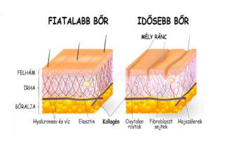 kollagén a bőrben